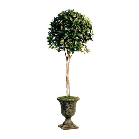 Sweet Bay Topiary Product Tile Image 443703