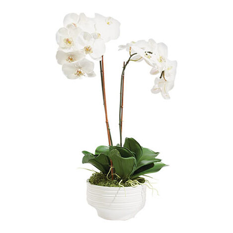 White Orchid in Ceramic Pot Product Tile Image 444544