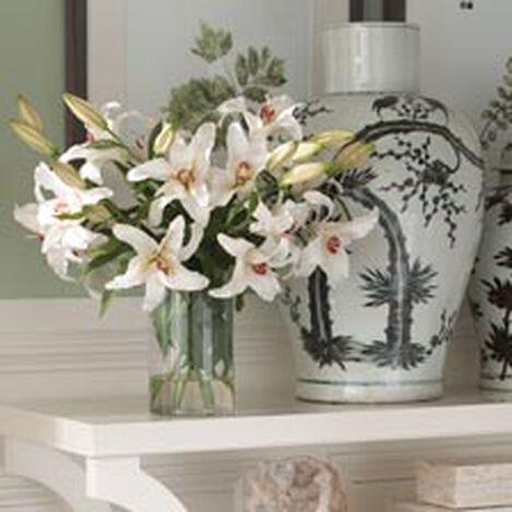 Casablanca Lily Watergarden ,  , hover_image