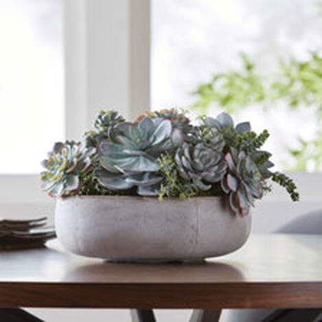 Mixed Succulents in Cement Tray Product Tile Hover Image 442229
