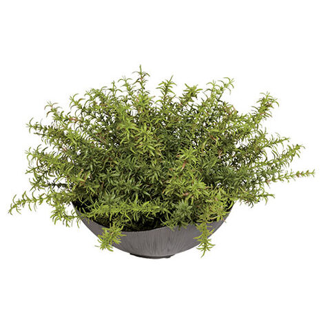Grass in Kensli bowl Product Tile Image 443724
