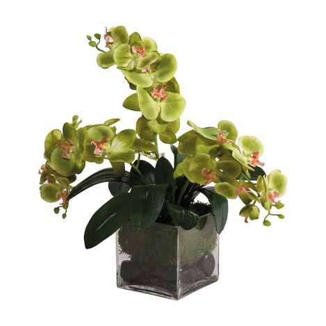 Green Phalaenopsis Orchids Product Tile Image 444553
