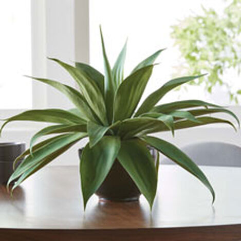 Aloe Plant in Concrete Bowl Product Tile Hover Image 442231
