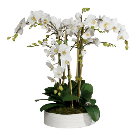 Phalaenopsis in Ceramic Bowl Product Tile Image 444556