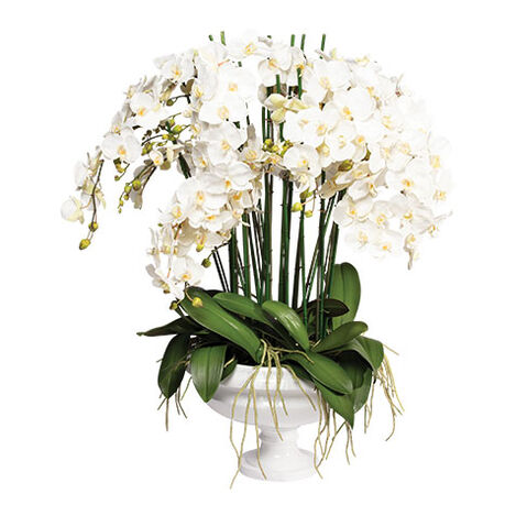 White Phalaenopsis Orchid in Pedestal Bowl Product Tile Image 442208