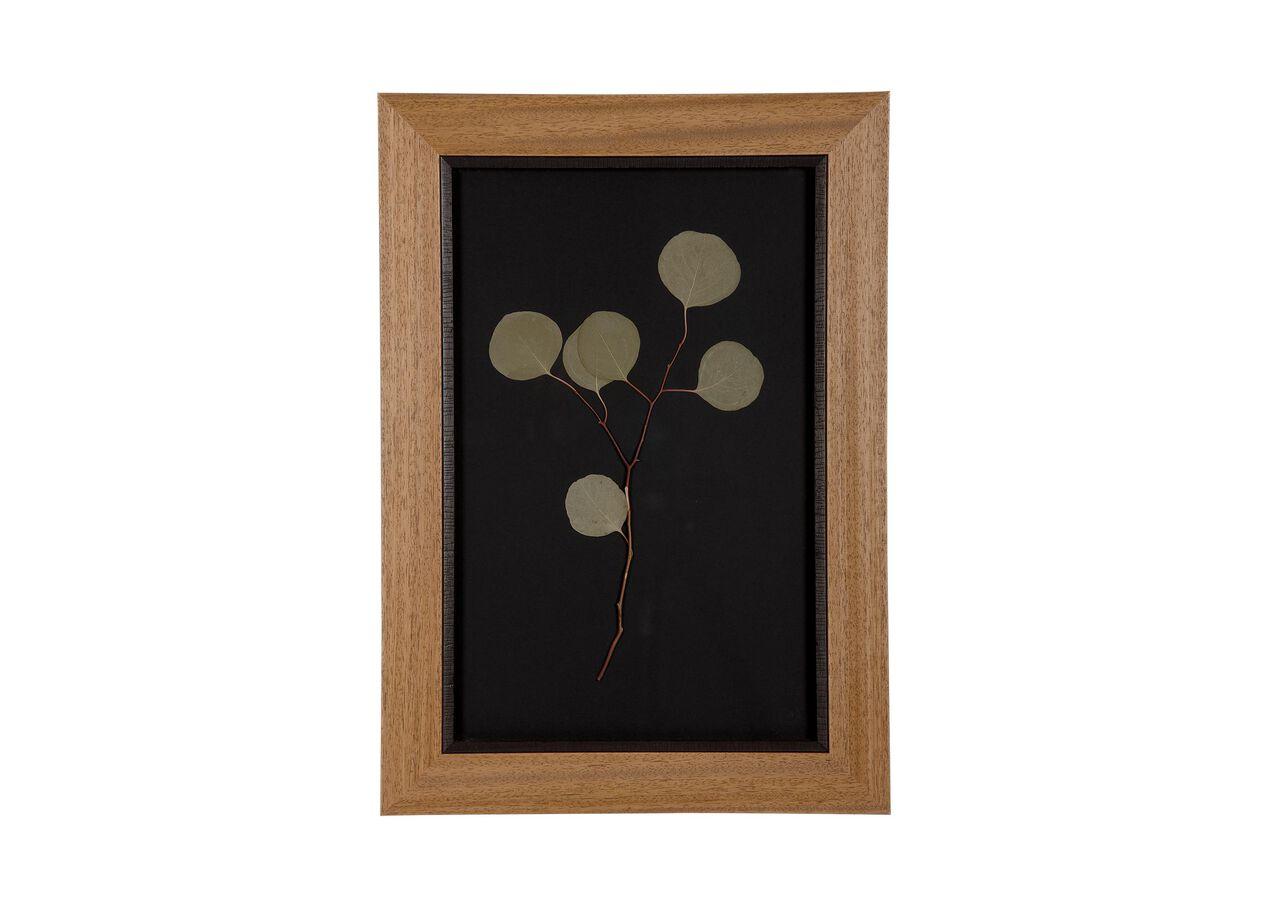 Botanicals on Black X | Pressed Botanicals | Ethan Allen