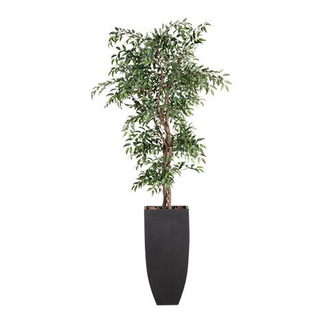 Smilax Tree in Tall Terrazzo Pot Product Tile Image 443725