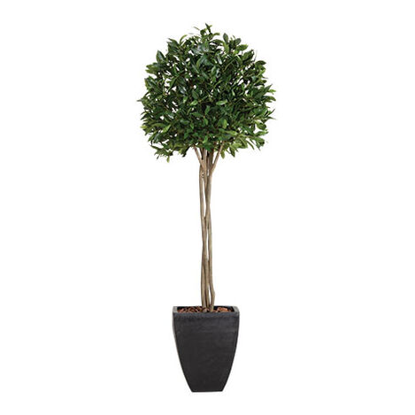 Bayleaf Topiary Product Tile Image 443720