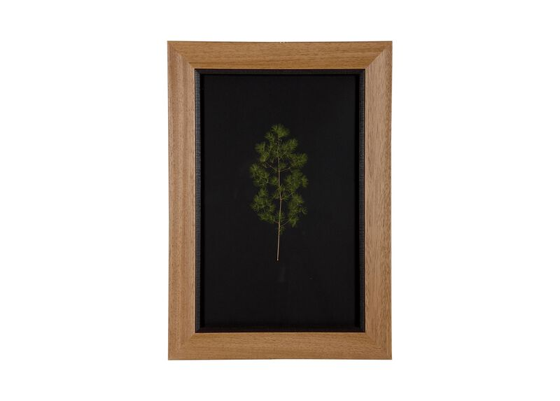 Botanicals on Black IV | Pressed Botanicals | Ethan Allen
