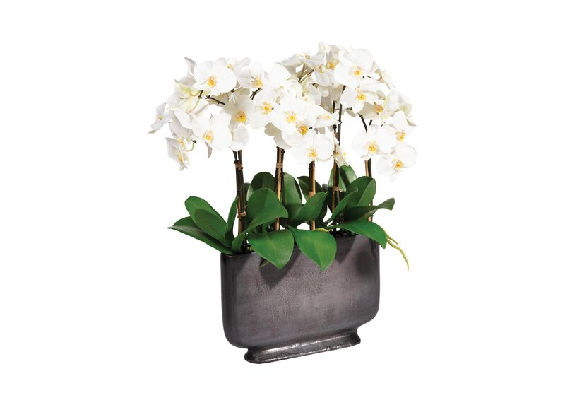 White Orchid in Rectangular Planter