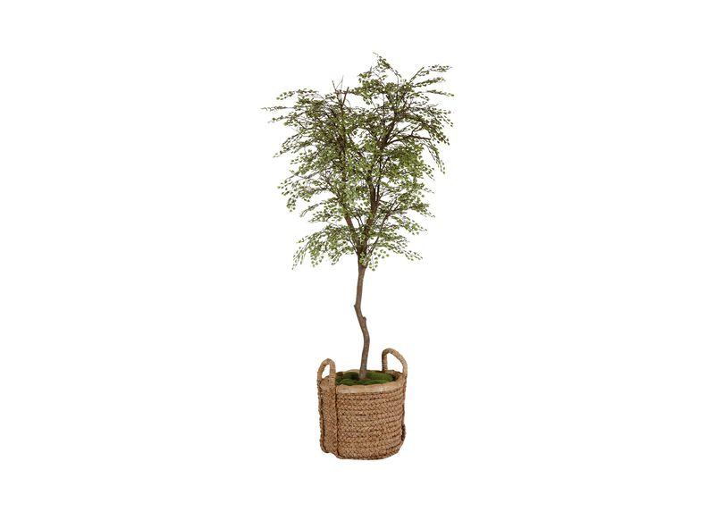Maidenhair Tree ,  , large_gray