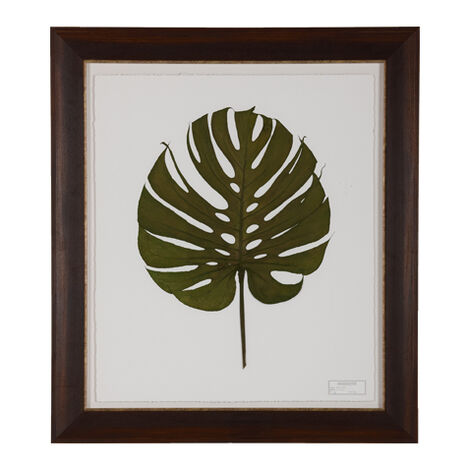 Monstera II ,  , large
