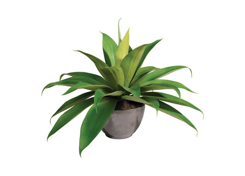 Aloe Plant in Concrete Bowl