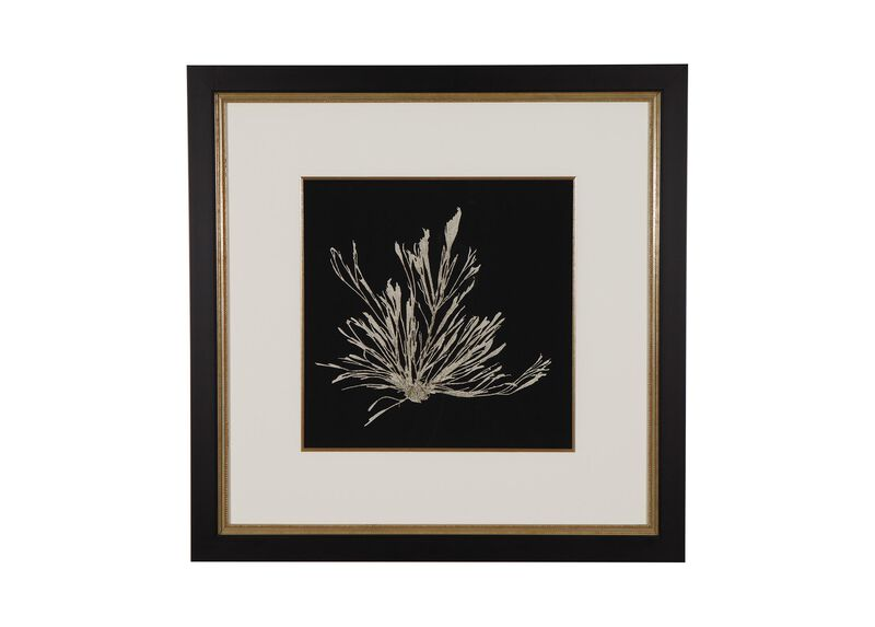 Seaweed on Black III