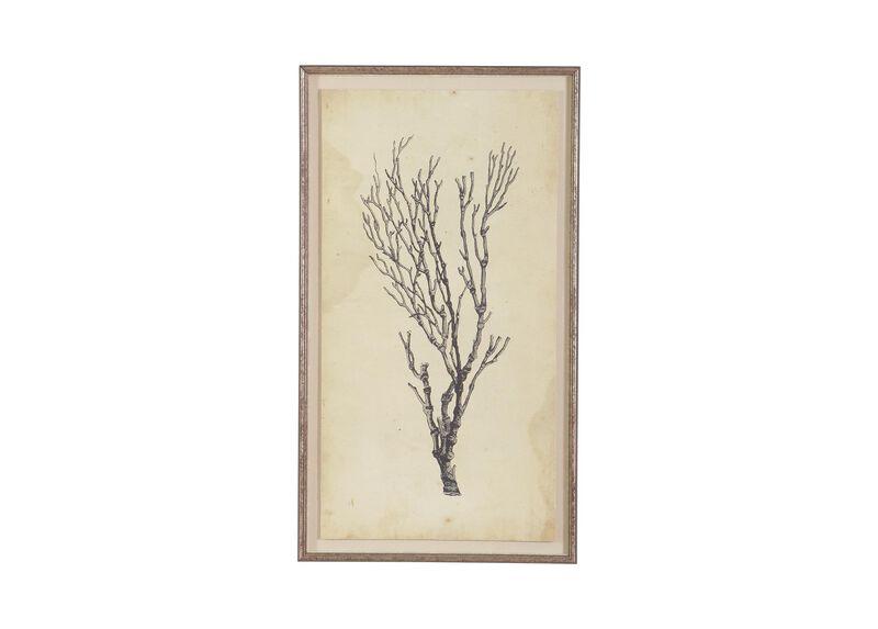 Antique Coral Specimen B