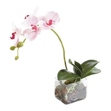Petite Spotted Phalaenopsis Product Tile Image 444540
