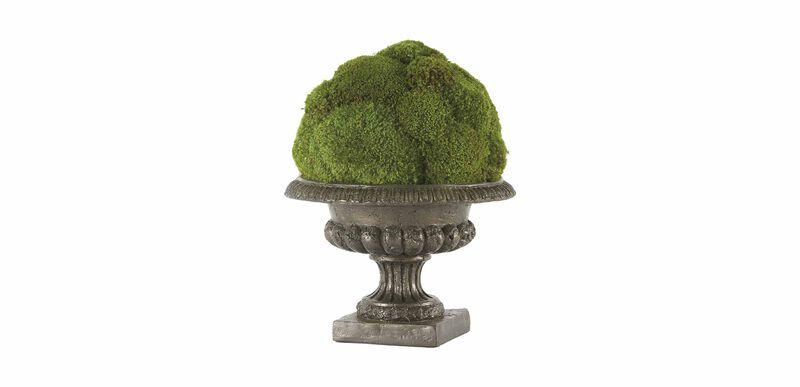 Moss Ball in Urn