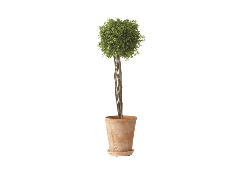 Tall Boxwood Topiary