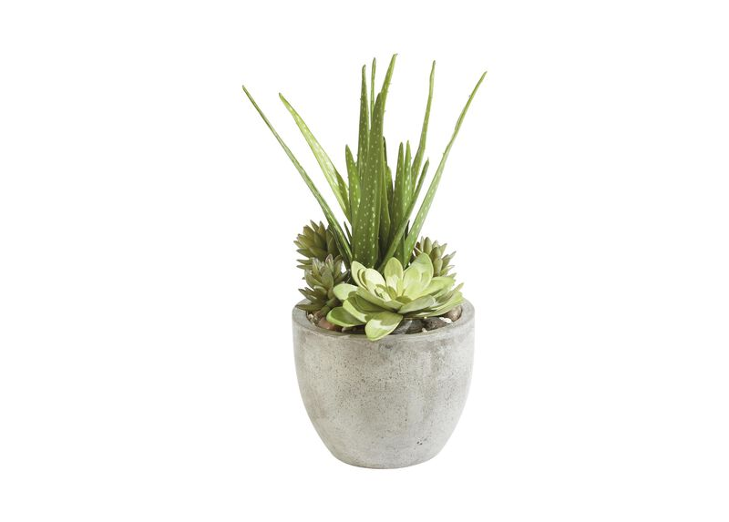 Aloe and Succulents in Pot ,  , large_gray