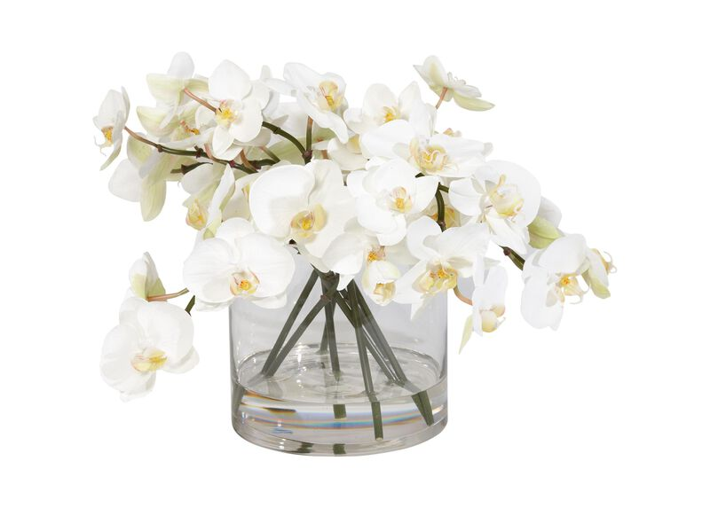 White Orchids in Glass Cylinder