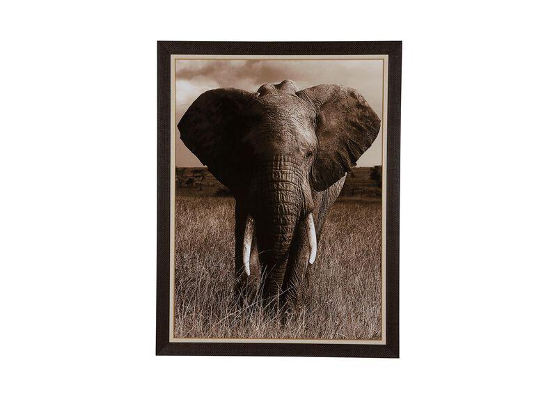 Elephant ,  , large_gray