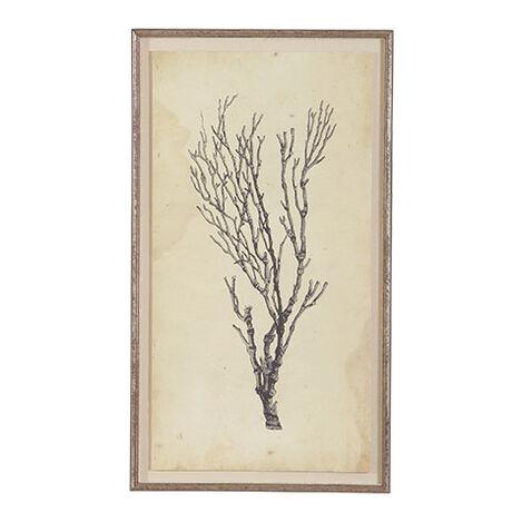 Antique Coral Specimen B Product Tile Image 073009B