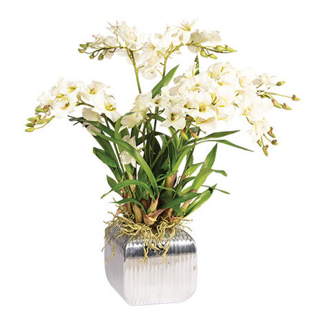 Dendrobium Orchid in Planter Product Tile Image 442209