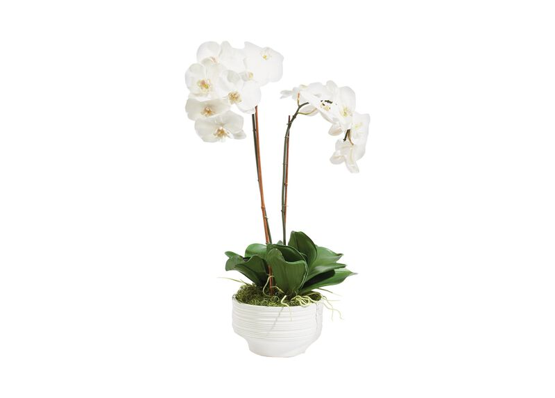 White Orchid in Ceramic Pot