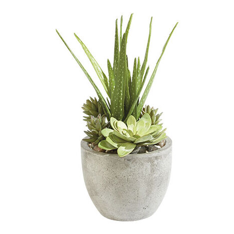 Aloe and Succulents in Pot Product Tile Image 444047