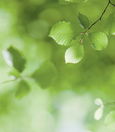full of green leaves