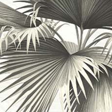 Black Endless Summer Palm Wallpaper