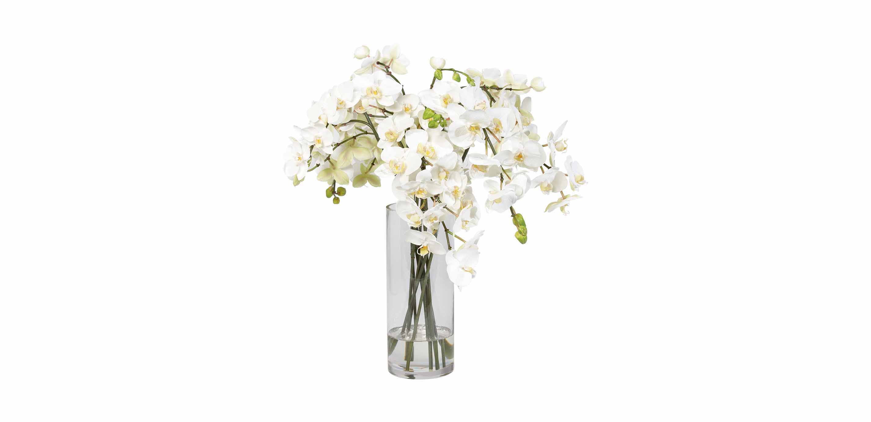White orchids in glass vase florals trees images white orchids in glass vase largegray reviewsmspy