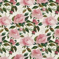 Audrina Fuchsia (18307) Audrina Charcoal Fabric By the Yard