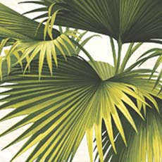 Green Endless Summer Palm Wallpaper