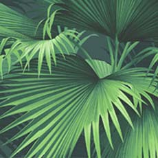 Emerald Endless Summer Palm Wallpaper