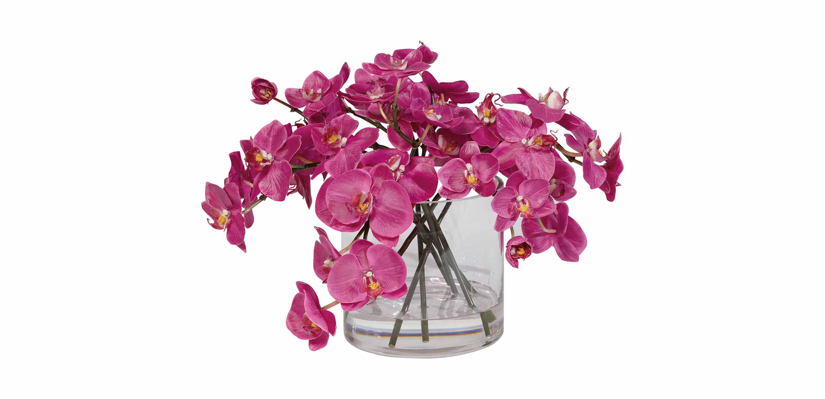 Fuchsia orchids in glass cylinder florals trees images fuchsia orchids in glass cylinder largegray reviewsmspy