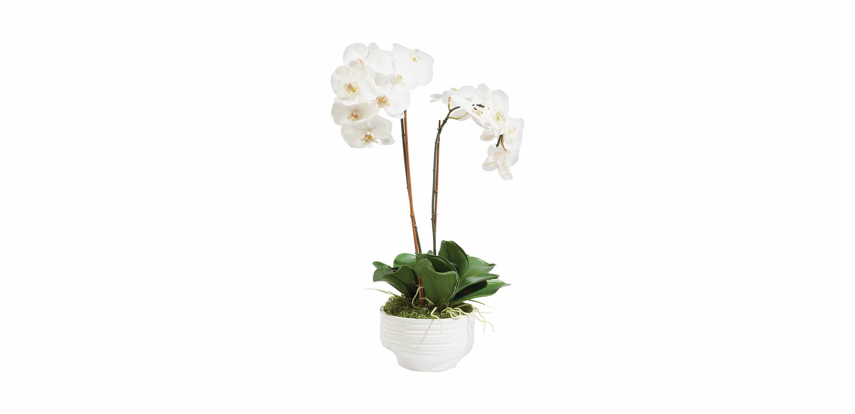 Orchid Pots Ceramic White White Orchid in Ceramic Pot